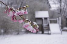 Fleur gelée devant une maison pour enfant vide
