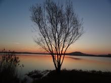 Arbre solitaire devant un lac, au couché du soleil
