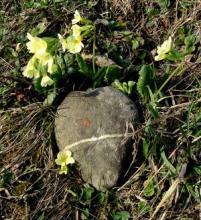Caillou en forme de coeur entouré de fleurs